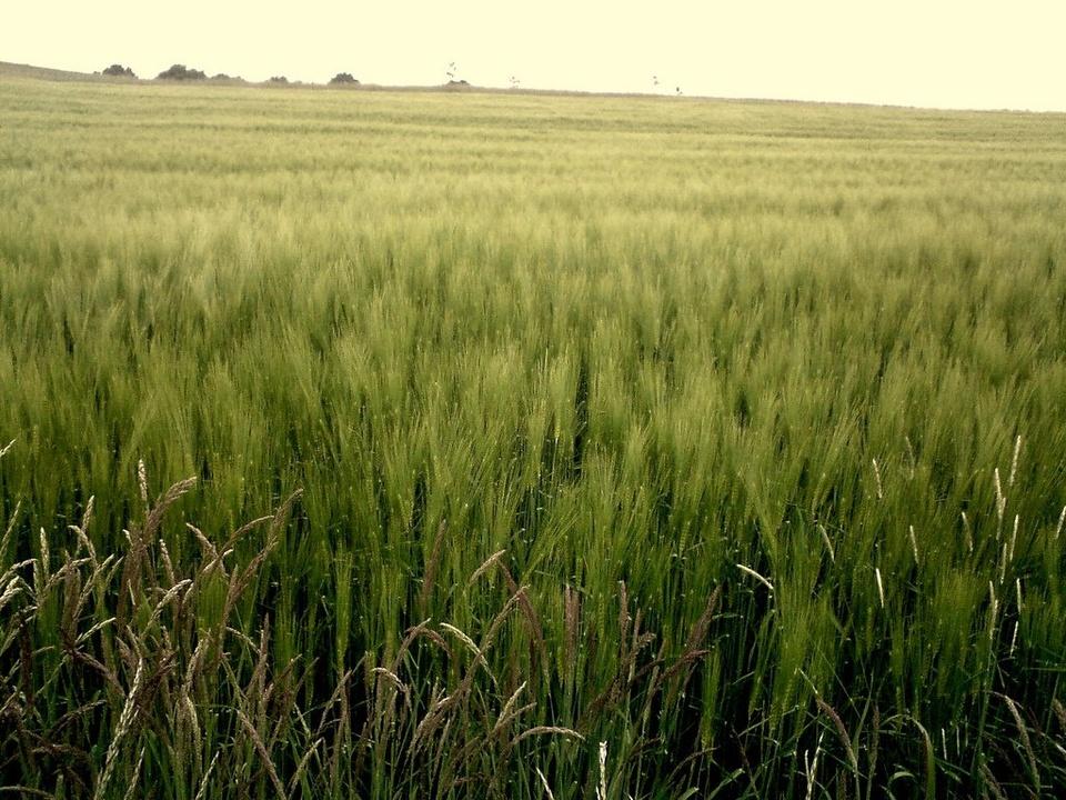 Grass Field - Teen Rehab