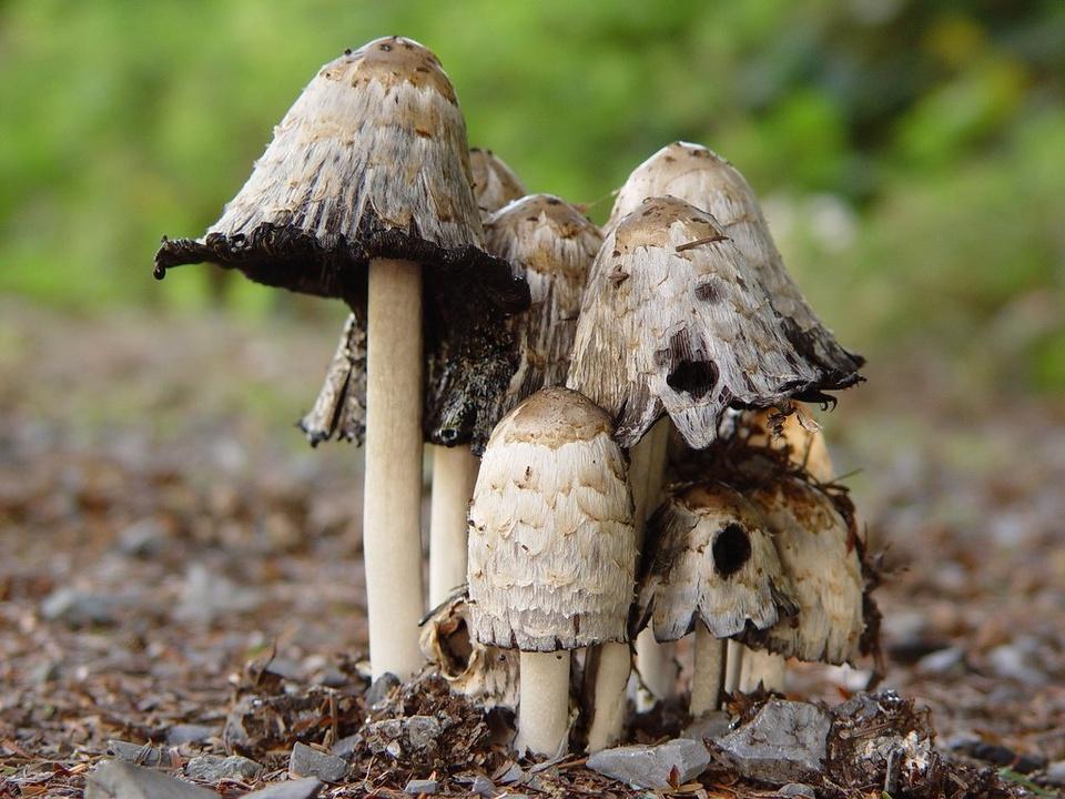 Magic Mushrooms - Teen Rehab