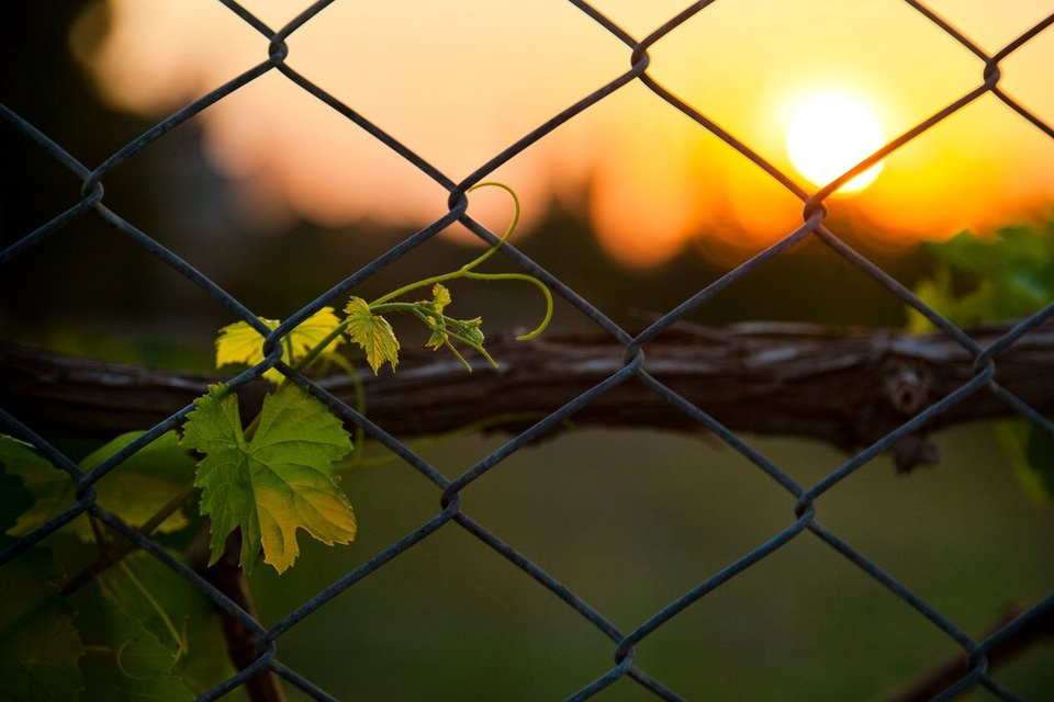 Fence At Sunset - Teen Rehab