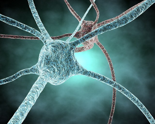 Brain Nervous System - Teen Rehab
