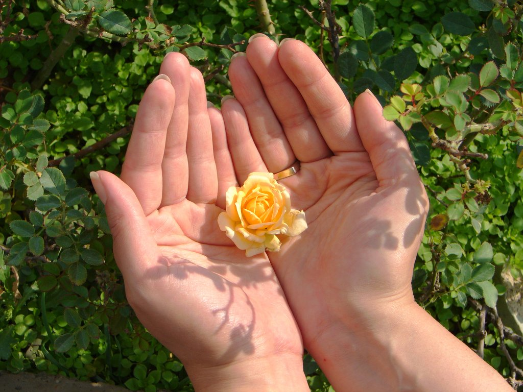 Hands Holding Yellow Flower - Teen Rehab
