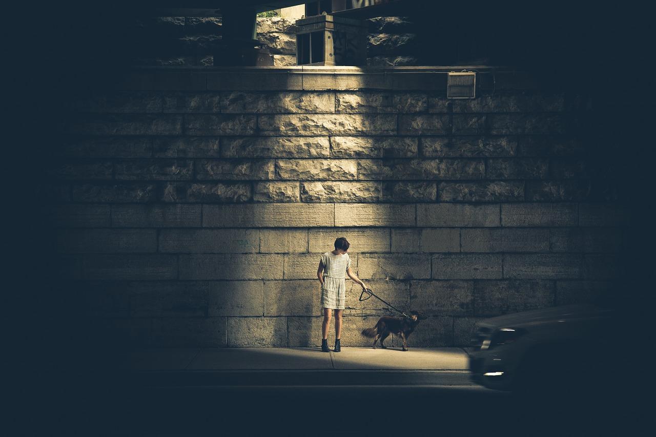boy dog brick wall dog shadow light dark