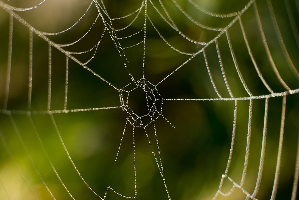 spiderweb web nature