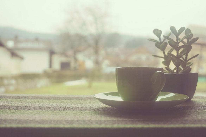 cup mug plants