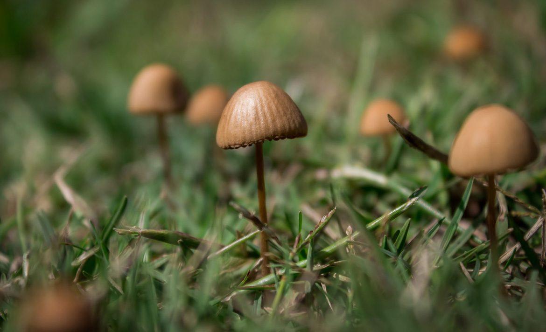 Teen Rehab - list of hallucinogens - mushroom